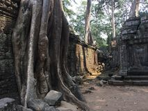 Angkor Wat in Siem Reap, Cambodia. Ancient ruins of Khmer stone temple overgrown with the roots and giant strangler fig trees. In jungle forest. Place of Stock Photography