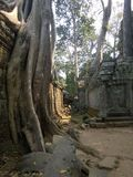 Angkor Wat in Siem Reap, Cambodia. Ancient ruins of Khmer stone temple overgrown with the roots and giant strangler fig trees. In jungle forest. Place of Stock Images