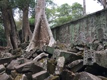 Angkor Wat in Siem Reap, Cambodia. Ancient ruins of Khmer stone temple overgrown with the roots and giant strangler fig trees. In jungle forest. Place of Royalty Free Stock Image
