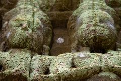 Angkor Wat Statues mit Spinnennetz lizenzfreie stockfotos