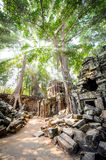 Angkor wat 20. The sun shining through the jungle canopy above the temple of Ta Prohm in Angkor Wat (Siem Reap, Cambodia Stock Photos
