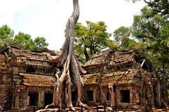 Angkor Wat - TA Prohm Στοκ Φωτογραφία