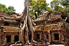 Angkor Wat - TA Prohm Στοκ εικόνες με δικαίωμα ελεύθερης χρήσης