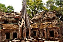 Angkor Wat - Ta Prohm royalty free stock images