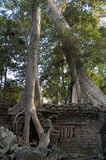 Angkor Wat - Ta Prohm temple Royalty Free Stock Images