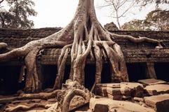Angkor Wat tempel Fotografering för Bildbyråer