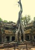 Angkor Wat Tempel En khmercivilisation för den cambodia för angkoren skördar banteay lotuses laken siemsreytempelet Turism i Camb Arkivfoton