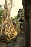 Angkor Wat Tempel En khmercivilisation för den cambodia för angkoren skördar banteay lotuses laken siemsreytempelet Turism i Camb Arkivbilder