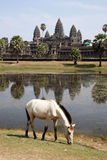 Angkor Wat Temple. Siem Reap Angkor Cambodia: Angkor Wat is a temple complex at Angkor, Cambodia, built for the king Suryavarman II in the early 12th century stock image