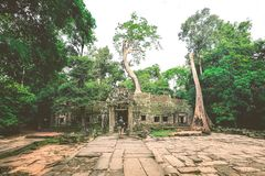 Angkor Wat temple in Cambodia royalty free stock images
