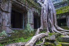 Angkor Wat Temple in Cambodia. SIEM REAP , CAMBODIA - OCT 15 : The Ta Prohm temple in Angkor Thom, Siem Reap Cambodia on October 15 2017 , Angkor Thom was the Royalty Free Stock Image