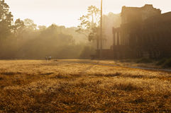 Angkor Wat (temple complex in Cambodia) in the morning Stock Images