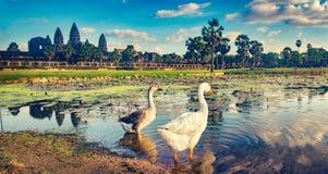 Angkor Wat temple at sunset. Siem Reap. Cambodia. Panorama stock photos