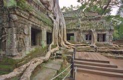 Angkor Wat Temples et arbres Image stock