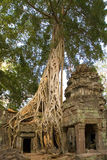 Angkor Wat - templo de Ta Prohm - Cambodia Imagens de Stock