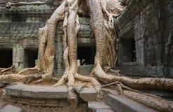 Angkor Wat - templo de TA Prohm - Camboya Imagenes de archivo