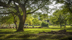 Angkor Wat trädgårdar Royaltyfria Bilder