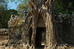 Angkor Wat Tree,Cambodia stock photography