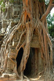 Angkor Wat Tree,Cambodia stock photo
