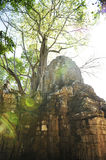 Angkor Wat and tree Royalty Free Stock Image