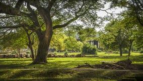 Angkor wat tuinen Royalty-vrije Stock Afbeeldingen