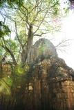 Angkor Wat und Baum Lizenzfreies Stockbild