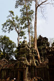 Angkor Wat Royalty Free Stock Image