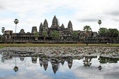 Angkor waterlily Στοκ εικόνα με δικαίωμα ελεύθερης χρήσης