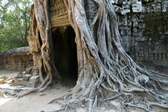 Angkor Wat complex temple Royalty Free Stock Photo