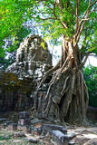 angkor索马里兰ta寺庙 库存图片
