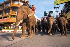 Angle faible de marche d'éléphants de Surin Image libre de droits