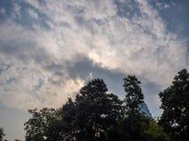 Angle faible des arbres sur le ciel nuageux photographie stock libre de droits