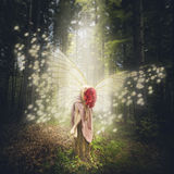 Angle of the forest Stock Photography