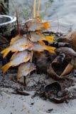 angle metall för vitlök för clippingmatlagningfiskar hög isolerad ingen för pannaparsley för olja white för sikt för tomater för  Arkivbild