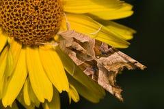 Angle shades on sunflower Stock Photos