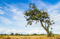 Angle tree Royalty Free Stock Image