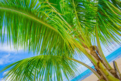 Angled Palm Tree Royalty Free Stock Photos