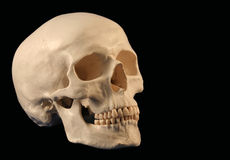 An Angled Skull. An Angled Facing Human Skull On Black Stock Images