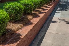 Angled view of new red brick retaining wall lined with boxwoods bordering a residential sidewalk. Horizontal aspect royalty free stock photos