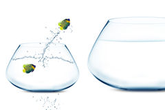 Anglefish im kleinen fishbowl lizenzfreies stockfoto