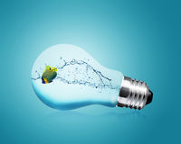 Anglefish jumping into light bulb. Good Concept for new Idea Stock Images