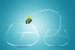 Anglefish jumping to Big bowl. Angelfish jumping to Big bowl, Good Concept for new life, Big Opportunity, Ambition and challenge concept Royalty Free Stock Photo