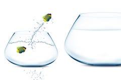 Anglefish in kleine fishbowl Royalty-vrije Stock Foto