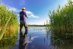 Angler. Catching the fish during summer day stock images
