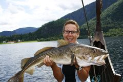 Angler with cod. A female angler shows a big cod stock image