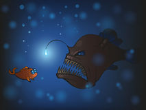 Angler fish Royalty Free Stock Photo