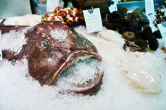 Angler fish or monkfish in store Royalty Free Stock Photography