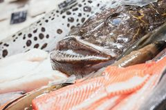 Angler fish and other seafood lay on counter. In fish shop, closeup photo with selective focus Royalty Free Stock Photos