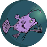 Angler-fish Stock Photo