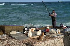 Angler on the Mediterranean in Alexandria Stock Photography